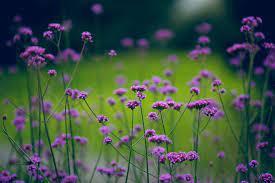 purple and green flower wallpaper