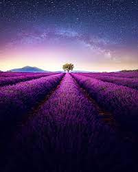purple and green full HD wallpaper