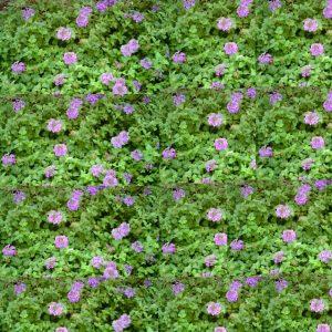 purple and green grassland wallpaper